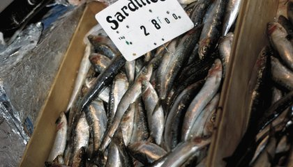 Sardines Take 400 Times Less Fuel To Catch Than Shrimp