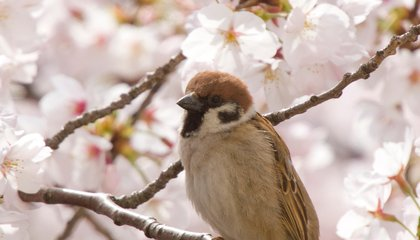 Birds Are in a Tailspin Four Years After Fukushima