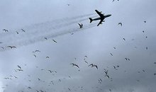 A Boeing 707 disturbs a colony of sooty terns during takeoff