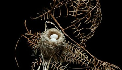 The Art of the Bird's Nest