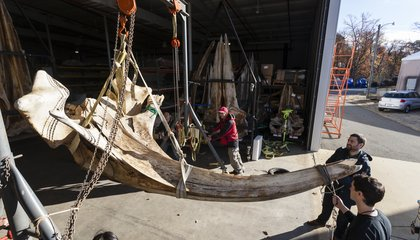 Watch A 1,400-Pound Right Whale Skull Arrive At the Smithsonian