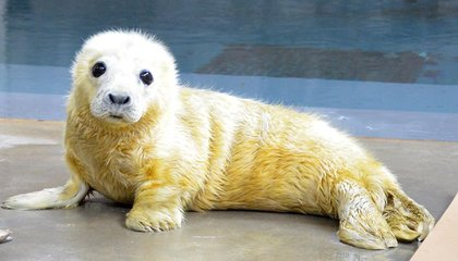 The Zoo's Baby Seal Is Cute and Cuddly, But Don't Be Fooled