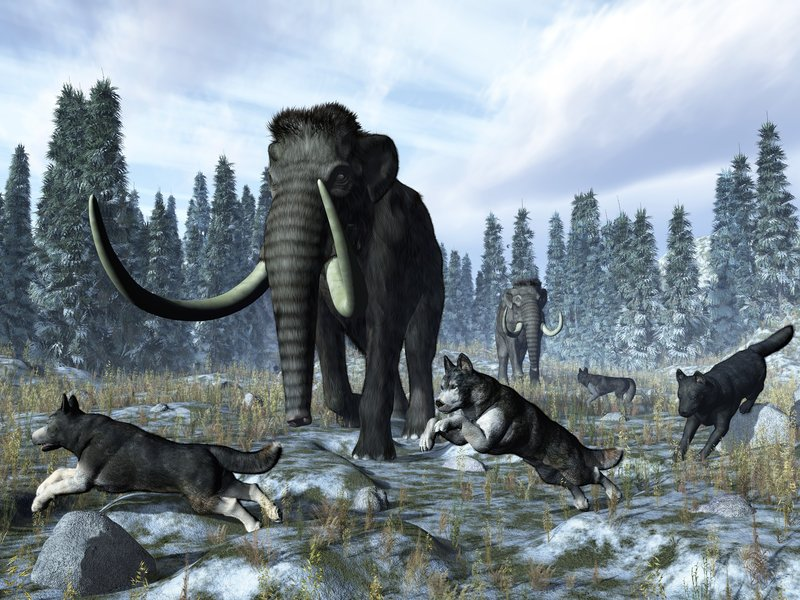 Dogs and Mammoths