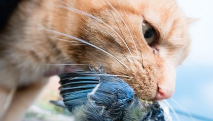 Rainbow Collars Could Help Keep Cats From Wiping Out Birds