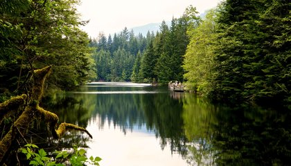 """One Vancouver Forest Played Just About Every Wooded Locale on """"The X-Files"""""""