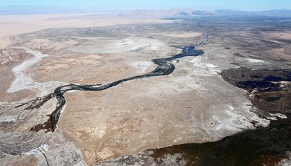 The Colorado River Delta Turned Green After a Historic Water Pulse