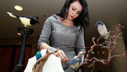 Why Taxidermy Is Being Revived for the 21st Century