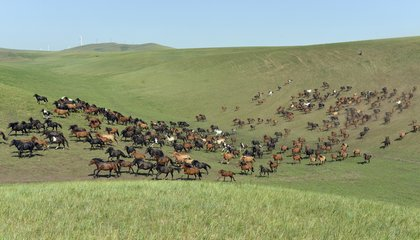 The World's Longest Horse Race Is Going on Right Now in Mongolia