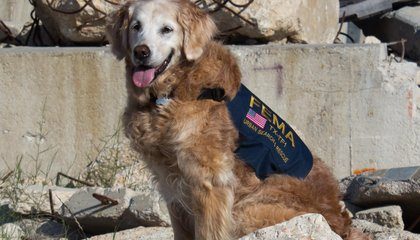Last Known 9/11 Search-and-Rescue Dog Dies