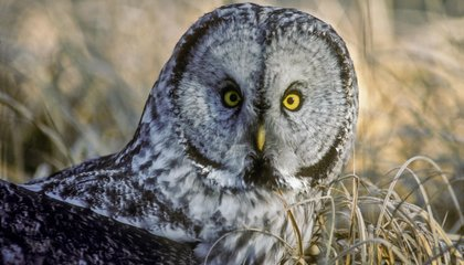 Beyond Owls And Larks: There Are Four Types of Sleepers