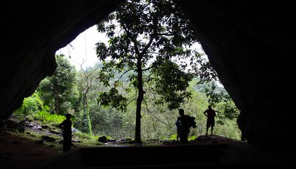Humans Relied on Rainforest Riches 12,000 Years Earlier Than Thought