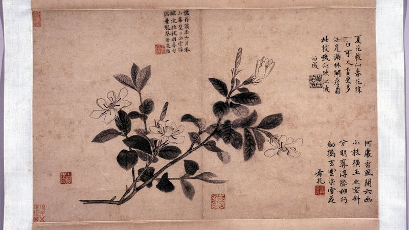 The British Museum's gardenia may be part of a seasonal album by Wang Yuan.