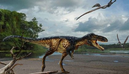 The Discovery of a Tiny Tyrannosaur Adds New Insight Into the Origins of T. Rex