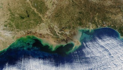 The Gulf of Mexico's Dead Zone Is the Size of a Small State
