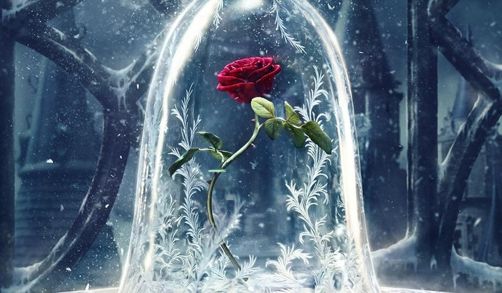 How Long Can a Real Red Rose Last?
