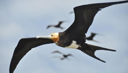 Can UAV Designers Learn From Soaring Birds?