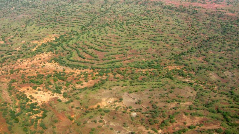 An aerial view of agroforestry management practices in Niger in 2004.