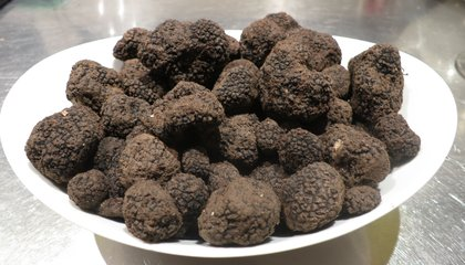 Good News, Foodies: Truffles Are Not Stuffed With Chernobyl Radiation
