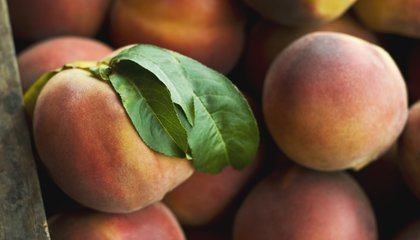 Peaches Were Domesticated in China 7,500 Years Ago