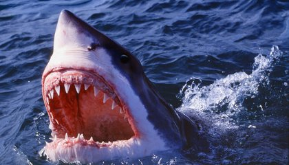 The State of Sharks, 40 Years After <em>Jaws</em>