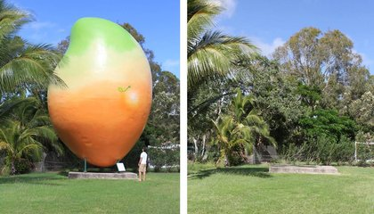 Giant Mango Goes Missing in Australia