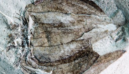 Researchers Uncover Fossils of 52-Million-Year-Old Tomatillos