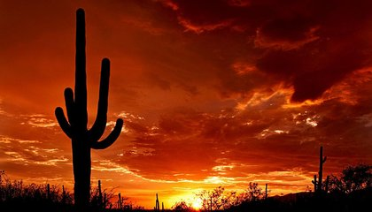 Cactus, Speedbird, and Other Great Call Signs