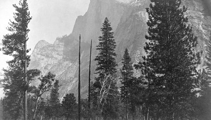 How an Obscure Photographer Saved Yosemite