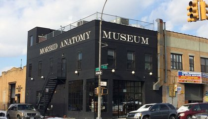 Morbid Anatomy Museum Closes Its Doors