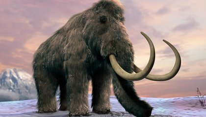 Humans Were in the Arctic 10,000 Years Earlier Than Thought