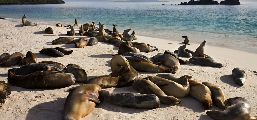 Seals basking on the beach