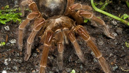 Where to See the World's Biggest Spiders