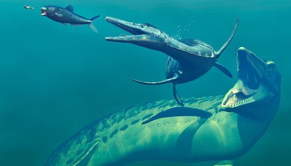 Researchers Piece Together Ancient Plesiosaur Attack