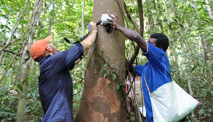 Scientists Are Recording 24-Hour Soundtracks of Rainforests