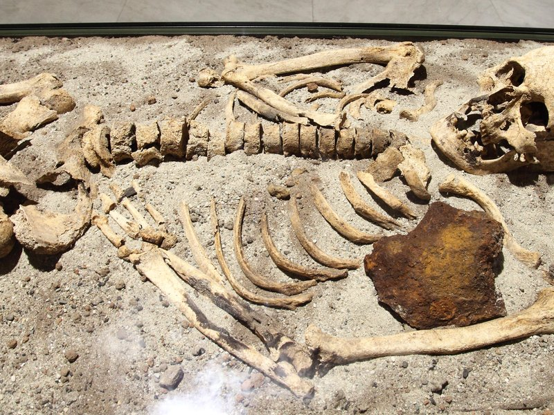 Climate Change Might Break Carbon Dating   Smart News   Smithsonian