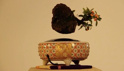 These Levitating Bonsai Will Brighten Your Home With Science