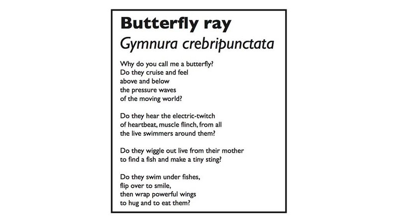 Sierra Nelson wrote this poem to accompany Adam Summers' image of a butterfly ray.