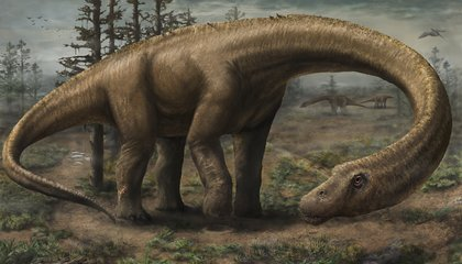 Meet Dreadnought, Largest Dinosaur In The World
