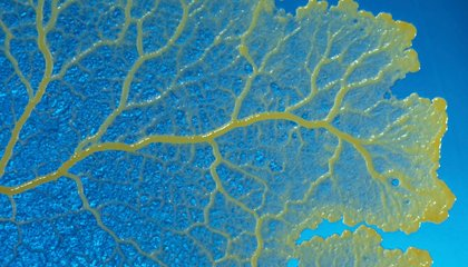 Listen to the Sweet Sounds of Slime Mold