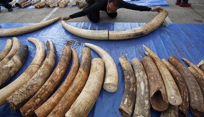 DNA and Databases Help Untangle the Web of the Illegal Wildlife Trade