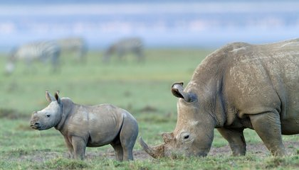 Five Ways to Fight Wildlife Crime in the Digital Age