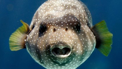 At Night, Fish Communicate With Special Calls, Whistles and Grunts