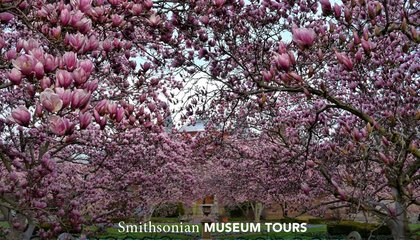 You Don't Need to Wait for Spring to Enjoy the Smithsonian Gardens