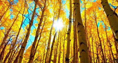 fall_trees_in_the_woods_388.jpg
