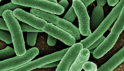 More Evidence That There's a Connection Between a Person's Gut Bacteria And Brain