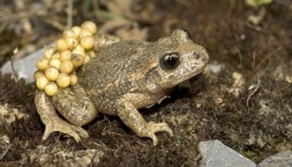 """Toad """"Fraud"""" May Have Been Ahead of His Time"""