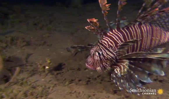 Preview thumbnail for video'Predators of the Reef