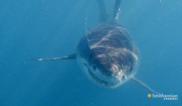 Preview thumbnail for video'The Real Story of Jaws