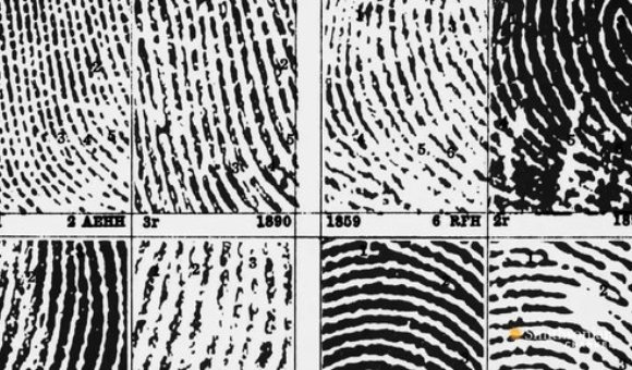 Preview thumbnail for video'Where Do Fingerprints Come From?