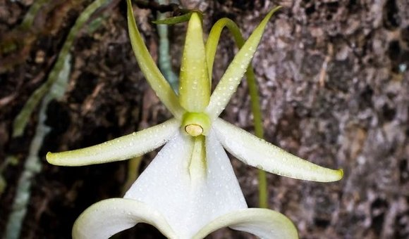 Preview thumbnail for video'The Endangered Orchids of North America